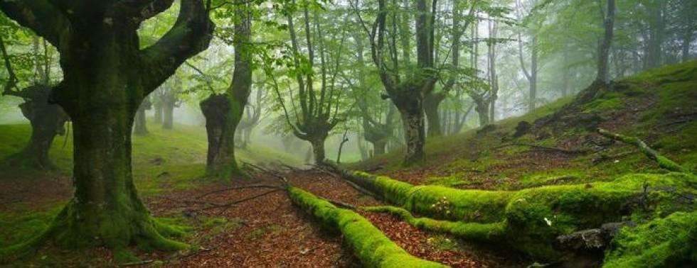 Das grüne und natürliche Basquenland