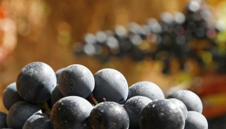 Rioja Alavaise