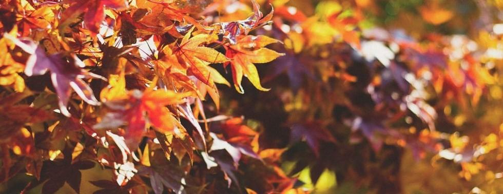 Spezielle für den Herbst